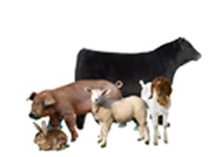 OxyGen Livestock Supplements